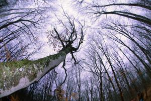 """Broken Limbs"" Photographed by NCLL Photography Participant"